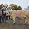 Gph vaches indiana gaec froidurot jour les baigneux 21